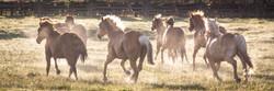Colorado Horse Ranches Photography Workshop_15