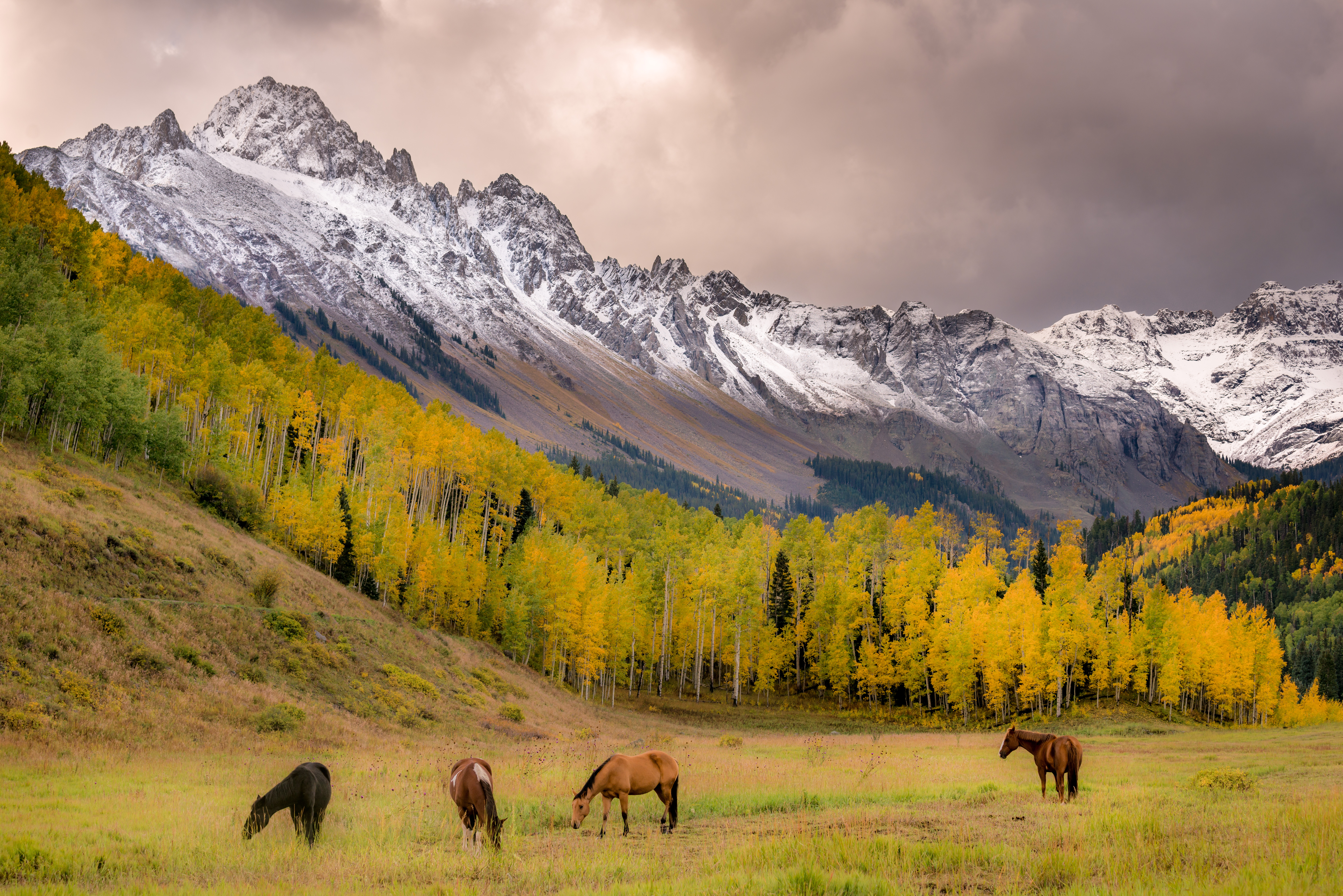 Colorado Fall Color Photography Workshops_3
