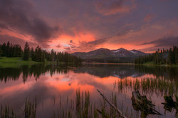 Colorado Wildflowers Photography Workshop_12