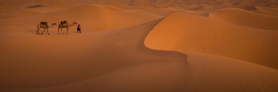 2 camels and boy cross vast sand dune landscape