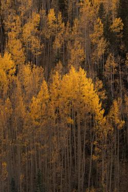 colorado off road fall color6-31