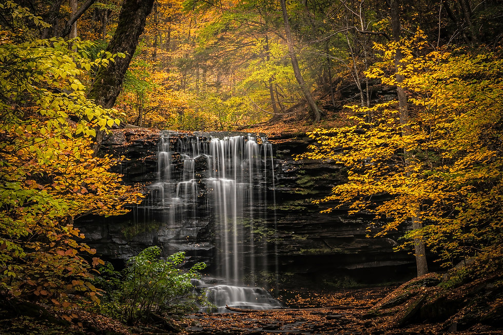 USA, Pennsylvania, Ricketts Glen State Park. Autumn forest and waterfalls cascading over r