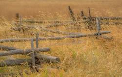 Colorado Fall Color Photography Workshops_12