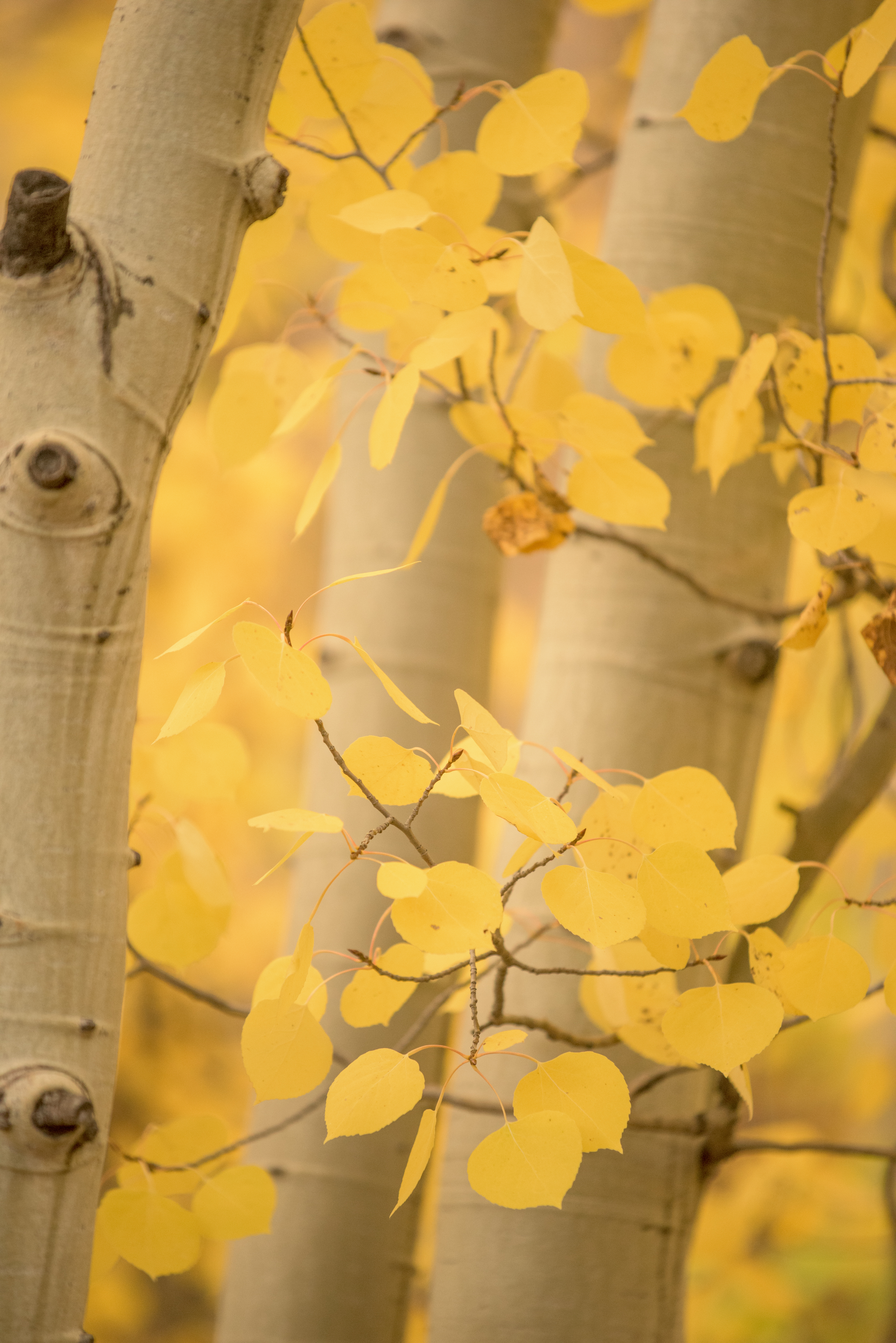 Colorado Fall Color Photography Workshops_8
