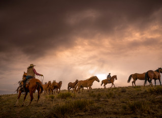 8 Tips to Improve Western and Horse Photography