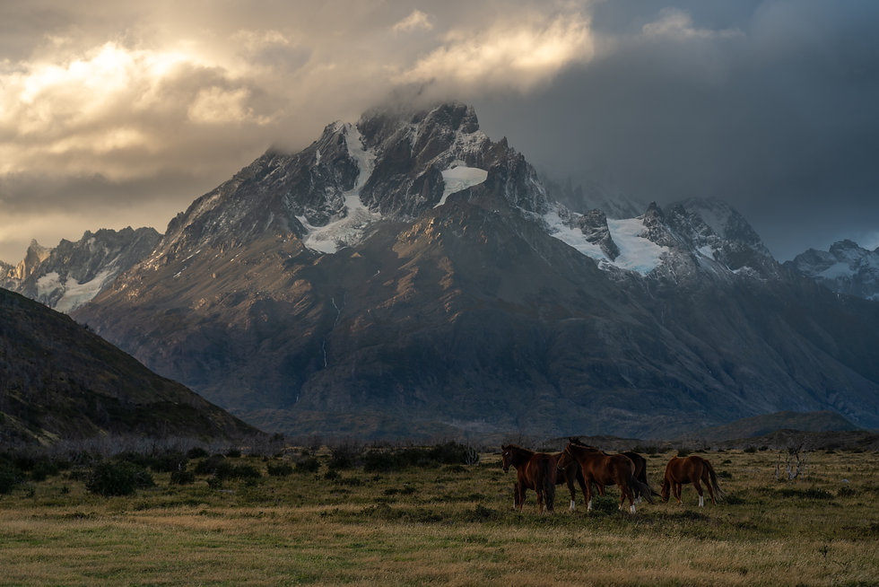 Giant mountain peak above small herd of horses in lush green valley. Located in Patagonia, Chile.