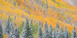 Colorado Fall Color Photography Workshops_4