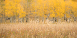 Colorado Fall Color Photography Workshops_19