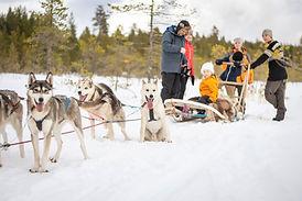 Dogsled_Enviken_Winter_fotoAnnaHolm_VisitDalarna.jpg