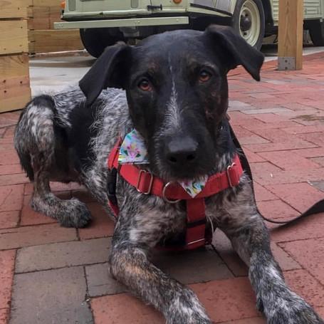 6 Best Dog-Friendly Patios in DC