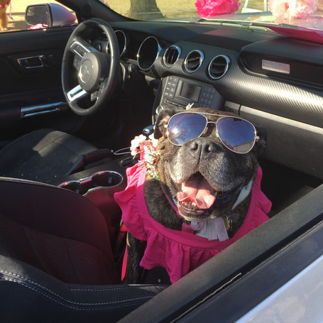 5 Tips for an Epic Road Trip with Your Dog