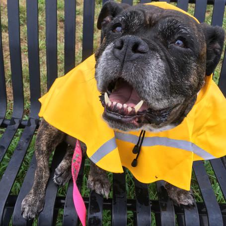 10 Hurricane Preparedness Tips for Your Pets