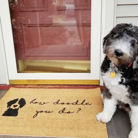 5 Tips For Preparing Your Pet For Company