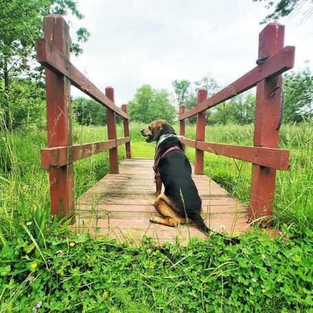 Hold the Handle: Tips for We the Dogs Instagram Takeovers