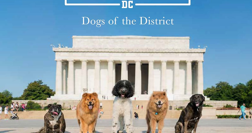 Dogs of the District Photo Book