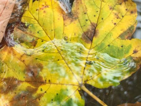 Im Herbst ist es ideal zur Ruhe zu kommen und alte Dinge los zu lassen. Wie die Bäume ihre Blätter.