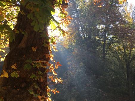 Der Herbst ist die schönste Zeit zum Wandern. Es ergeben sich wunderschöne Lichtspiele wenn das Sonn