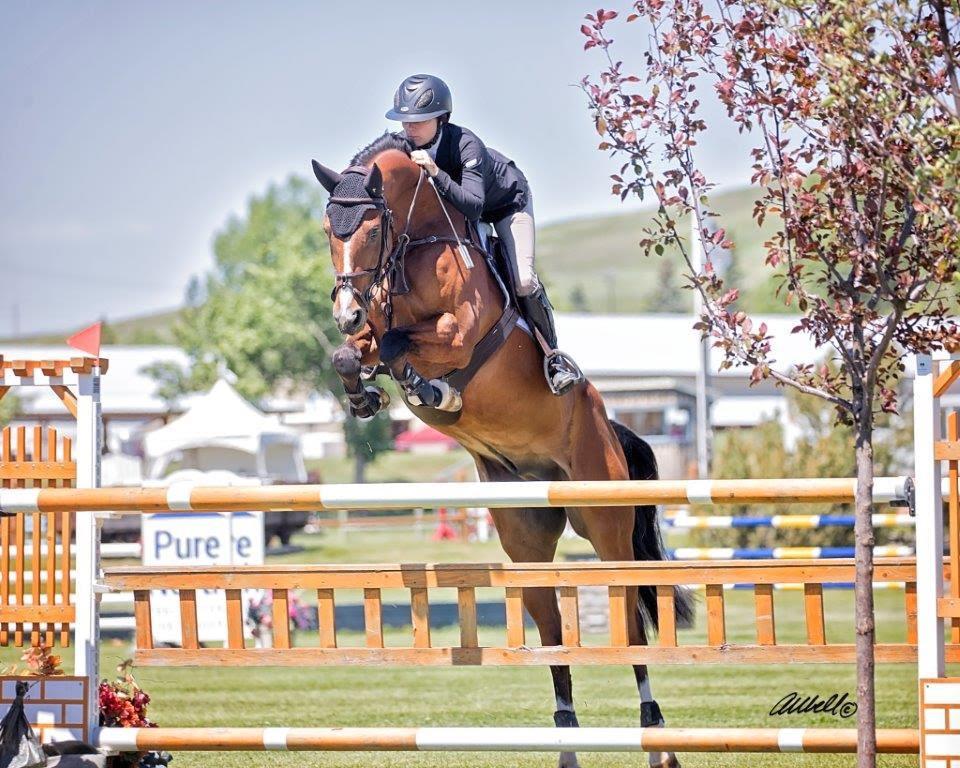 Mickey at RMSJ - Eperon Equestrian