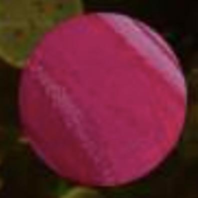 Morado mulberry