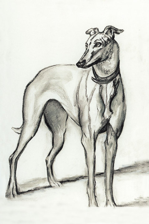 Greyhound - Greeting Card