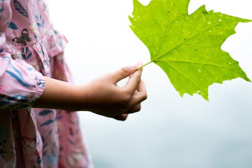 Holding a leaf.jpg