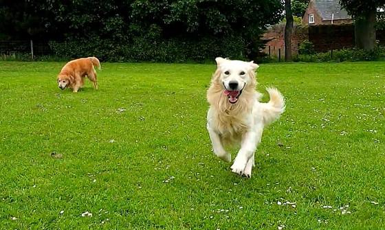 Dog Daycare @ Pleasance Farm, Dunbar by Star Walkies, Tel: 0794 967 2844 for more info!