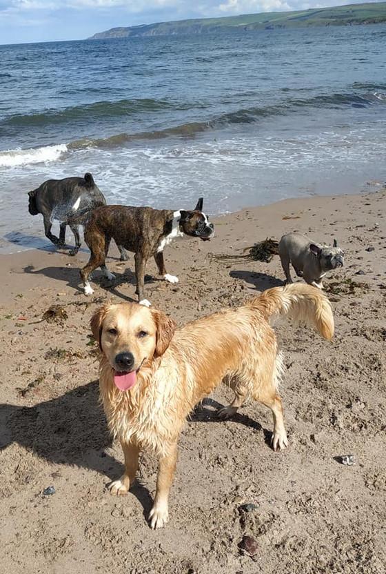 Dog Daycare Dunbar