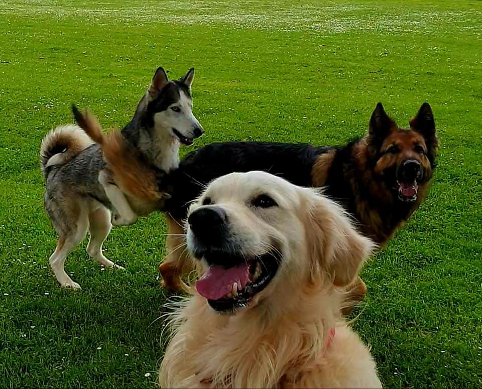 best-dunbar-dog-walkers