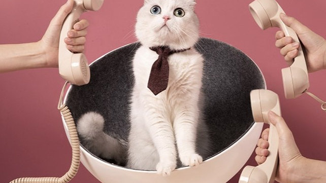 Furrytail Boss Cat Bed