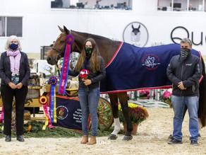 Monday Balous Earns the High Point American-Bred Horse Award