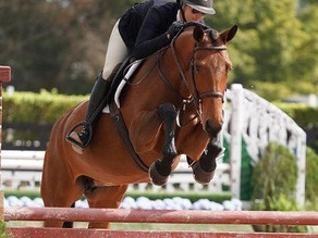 Galway Farm Takes Top Ribbons from Sunshine State Back to Chicago