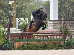 Spring Tri-Colors Bloom for Sapphire Riding Academy