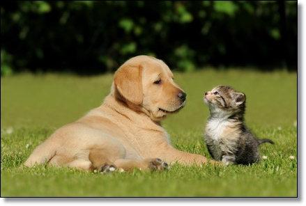 Meine liebsten Haustiere
