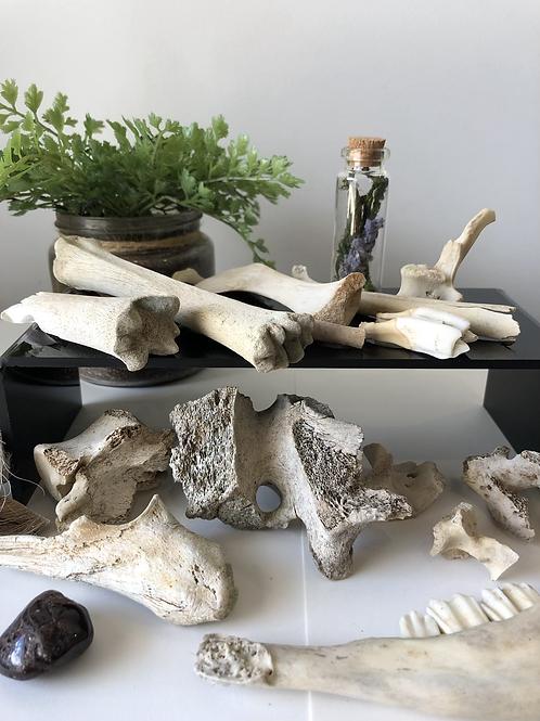 Liminal Place X Natura Maga - Throwing Bones Divination Set