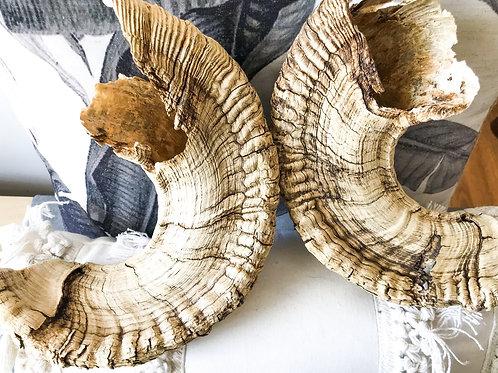 Liminal Place - Ram Horns