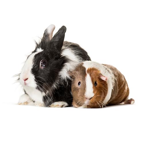 Guinea Pig & Rabbit Mix 18kg