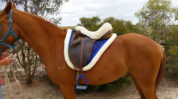 Concord Saddle Pad - Royal Blue