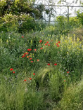 Several local pollinators and plants are planted in the Kevin Fitzgerald Park