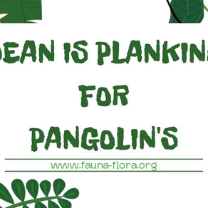 Dean Is Planking For Pangolins This August!