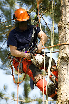 Climber Tree Trimming