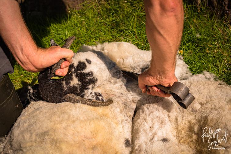 John Riney-Sheep Farm-2020-426.jpg