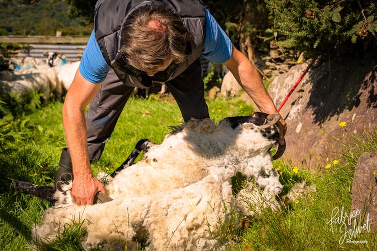John Riney-Sheep Farm-2020-345.jpg