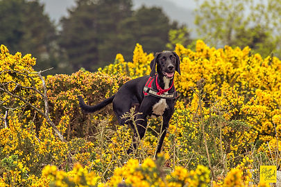 Dogs photography-Fabrice Jolivet Photogr