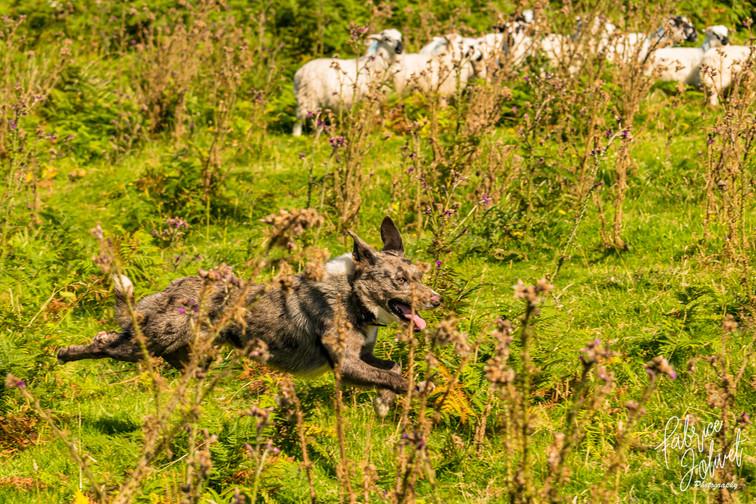 John Riney-Sheep Farm-2020-71.jpg