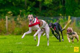 Dogs photography-Fabrice Jolivet Photogr