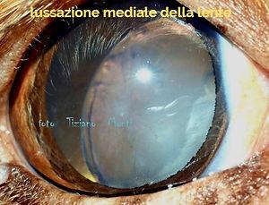 lussazione%20lente-clinvetmonza_edited.j