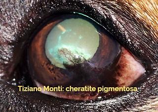 cheratite%20pigmentosa-clinvetmonza_edit