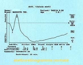 elettroretinogramma%20normale-clinvetmon