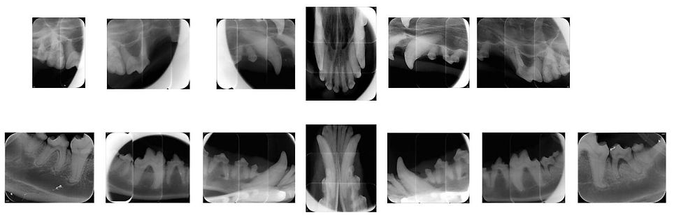 rx denti.jpg