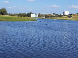 bellos-paisajes-lago-paloma-en-las-aves-